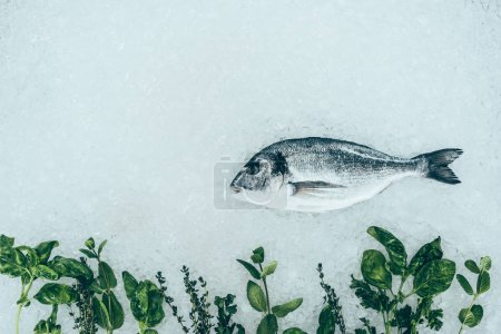top view of gourmet healthy dorado fish and herbs on ice