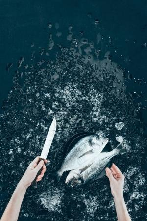 cropped shot of human hands with knife and fresh dorado fish on black
