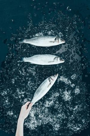 top view of human hand and raw fresh sea bass fish with ice on black