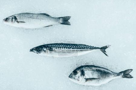 top view of various uncooked healthy sea fish on ice
