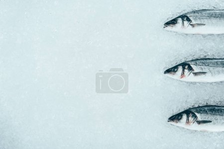 Photo for Top view of raw healthy natural fish on ice - Royalty Free Image