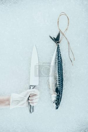 top view of raw mackerel fish with rope and human hand in glove holding knife