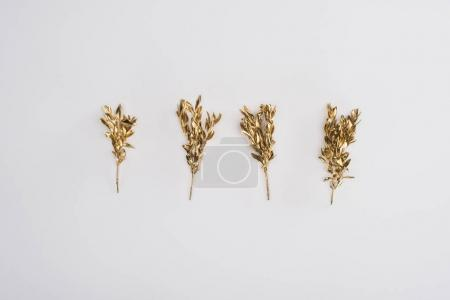 Photo for Close up view of colored golden plants isolated on grey - Royalty Free Image