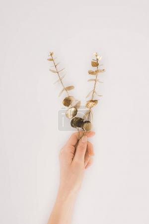 Photo for Partial view of female hand holding plants with golden leaves isolated on grey - Royalty Free Image