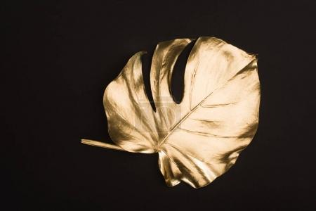 close up view of shiny big golden leaf isolated on black