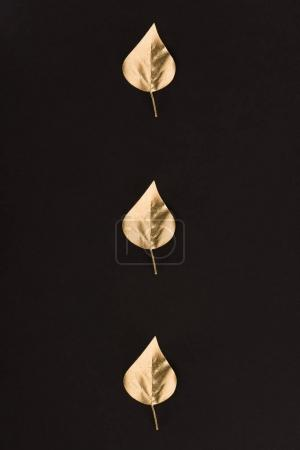 close up view of golden leaves designed in line isolated on black