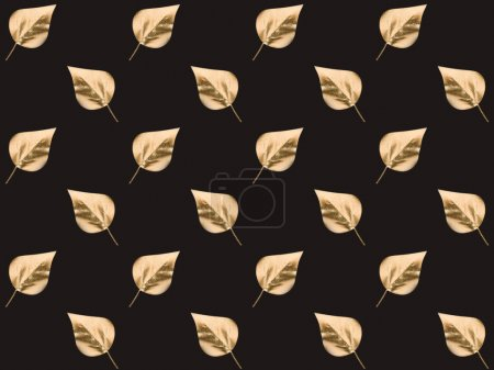 Photo for Full frame of bright golden leaves isolated on black - Royalty Free Image