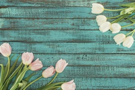 tender blooming tulips over green wooden background with copy space