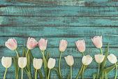 """Постер, картина, фотообои """"тендер Цветущие тюльпаны на зеленый деревянный фон с копией пространства"""""""