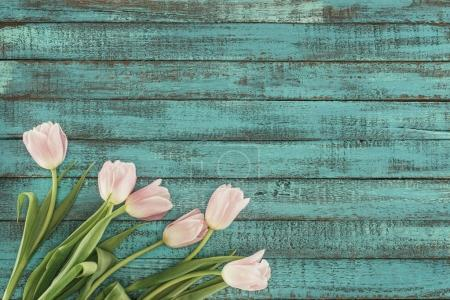 Photo for Tender blooming tulips over green wooden background with copy space - Royalty Free Image