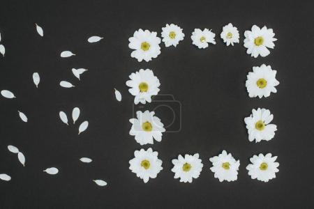 top view of frame of daisies with copy space over black background