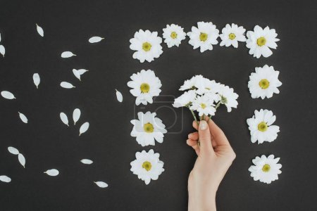 top view of cropped female hand with frame of daisies over black background