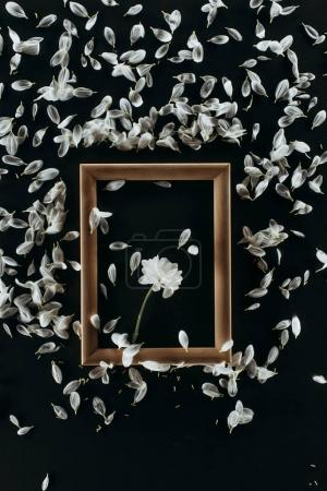 top view of wooden frame with daisy and petals isolated on black