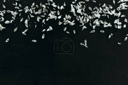 Photo for Top view of white petals heap isolated on black with copy space - Royalty Free Image