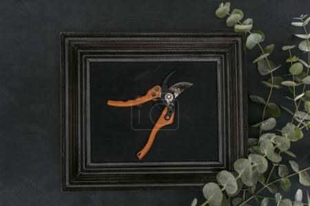 top view of vintage wooden frame with garden shears and eucalyptus over black background