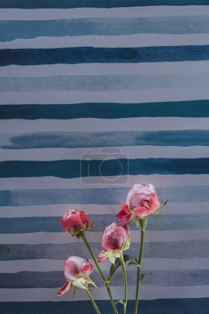 pink peony flowers over striped aquarelle background