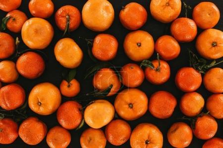 Photo pour Plein cadre sur mûrs mandarines avec feuilles isolés sur fond noir - image libre de droit