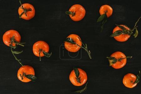 Flache Anordnung von Mandarinen mit Blättern auf schwarzer Holzoberfläche