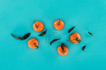 flat lay with ripe mandarins and leaves isolated on blue