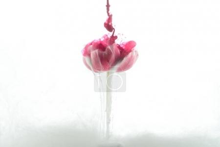Photo for Close up view of pink flower and paint splashes isolated on white - Royalty Free Image