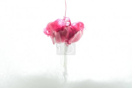 close up view of pink flower and paint splash isolated on white