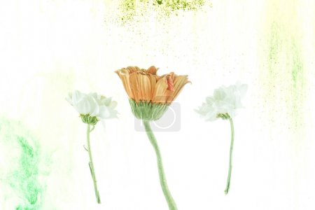yellow and white flowers and ink splashes isolated on white