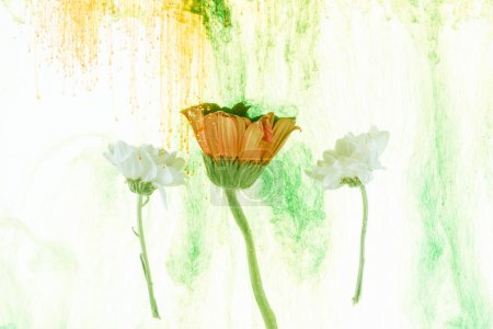 Photo for Yellow and white flowers and ink splashes isolated on white - Royalty Free Image