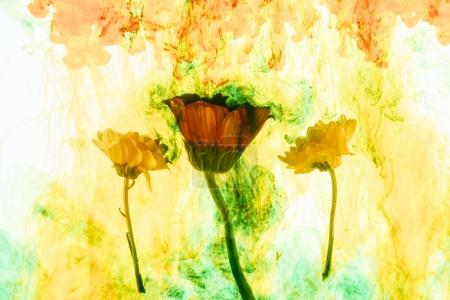 close up view of flowers and yellow paint splashes