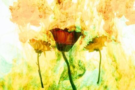 Photo pour Vue rapprochée des fleurs et des éclaboussures de peinture jaune - image libre de droit