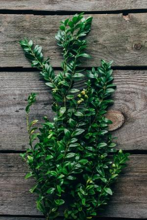 top view of green buxus branches on wooden surface