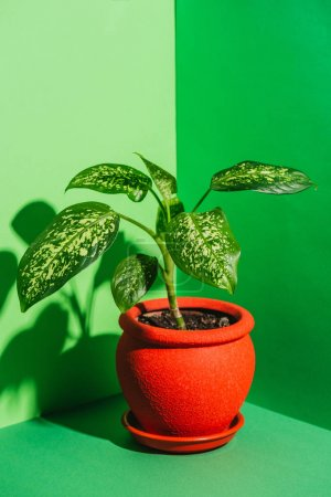 one green houseplant in red pot on green
