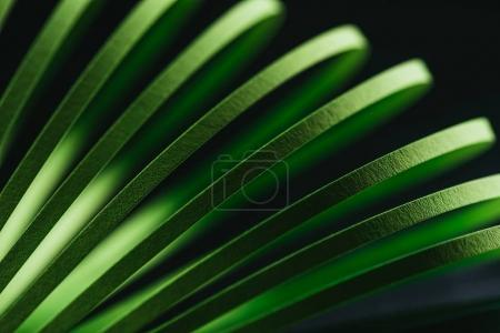 Photo for Close up view of green quilling striped paper on black - Royalty Free Image