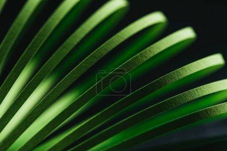 Photo pour Vue rapprochée du papier rayé vert piquant sur noir - image libre de droit