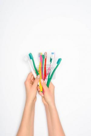 cropped view of woman holding colorful toothbrushes in hands, isolated on white