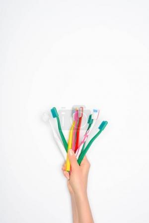 Photo pour Vue recadrée de la femme tenant des brosses à dents colorées, isolées sur blanc - image libre de droit