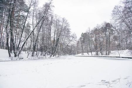 frozen river and trees in snowy forest