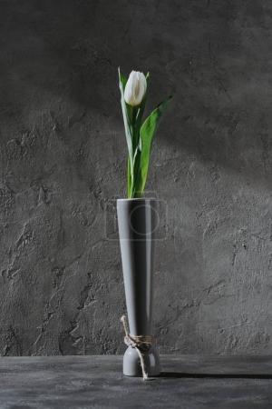 white spring tulip in grey vase on grey concrete surface