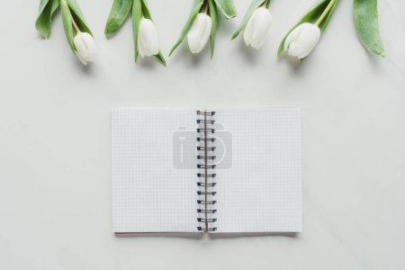 Photo pour Vue du dessus du bloc-notes avec des tulipes blanches sur la surface blanche - image libre de droit
