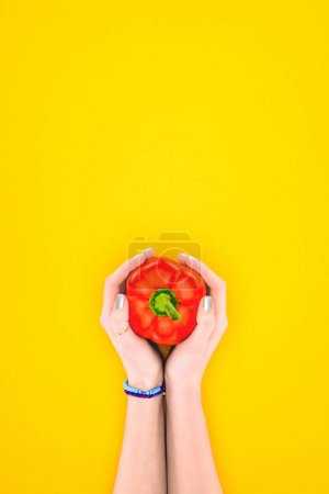 cropped shot of person holding raw red pepper in hands isolated on yellow
