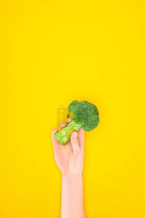 cropped shot of person holding fresh green organic broccoli isolated on yellow