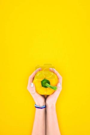 top view of human hands holding fresh raw organic pepper isolated on yellow