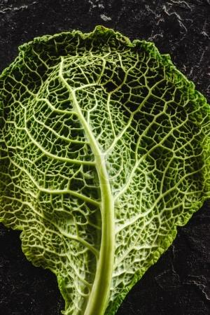close-up view of fresh  green leaf of healthy savoy cabbage on black