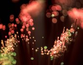 selective focus of shiny pink fiber optics background