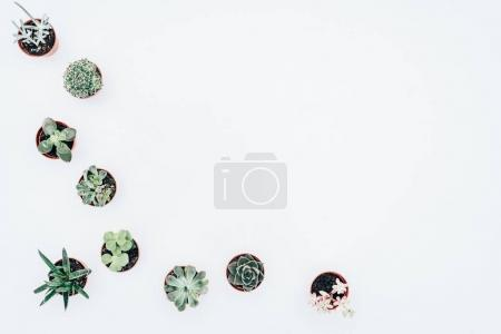 top view of beautiful various green houseplants in pots isolated on white