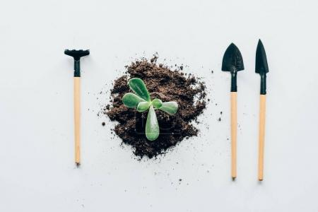 Photo for Top view of beautiful green plant in soil and gardening tools on grey - Royalty Free Image