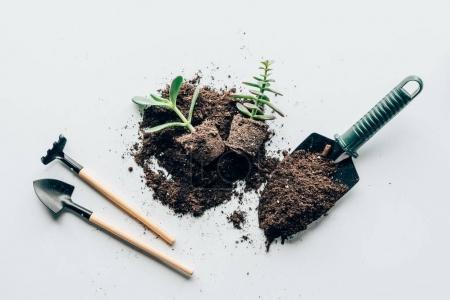 Photo pour Vue de dessus du sol, outils de jardinage et du sol, des plantes vertes sur fond gris - image libre de droit