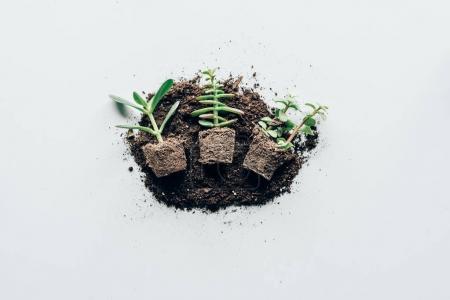 Photo pour Vue de dessus de belles plantes vertes dans le sol sur fond gris - image libre de droit
