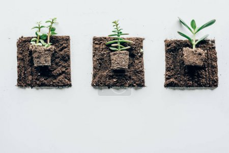 Photo for Top view of beautiful green plants in ground on grey - Royalty Free Image