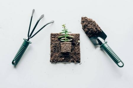 top view of beautiful green plant in ground and gardening tools on grey