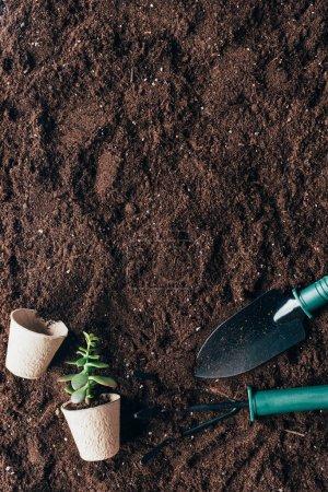 top view of gardening tools, green plant and flower pots on soil